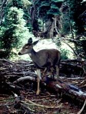 Deer in the Safari Park 02