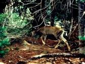 Deer in the Safari Park 03