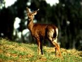 Deer in the park safari 04