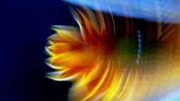 Bunga Api /LP 2