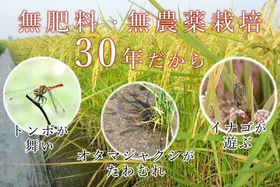 無肥料・無農薬30年