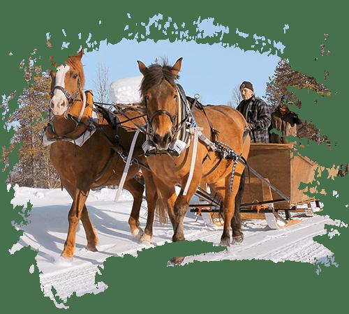carousel_horse_sled