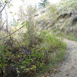 Peterson Creek Park 6
