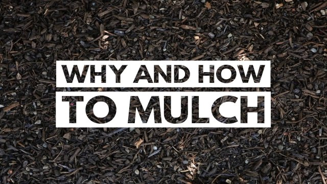 City of Kamloops - Why and How to Mulch