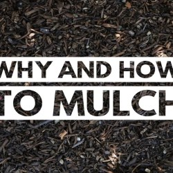 City of Kamloops – Why and How to Mulch