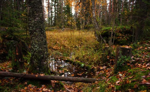 photo of autumn forest floor