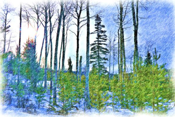 Through the Dogwood Plantations - Kamloops Trails