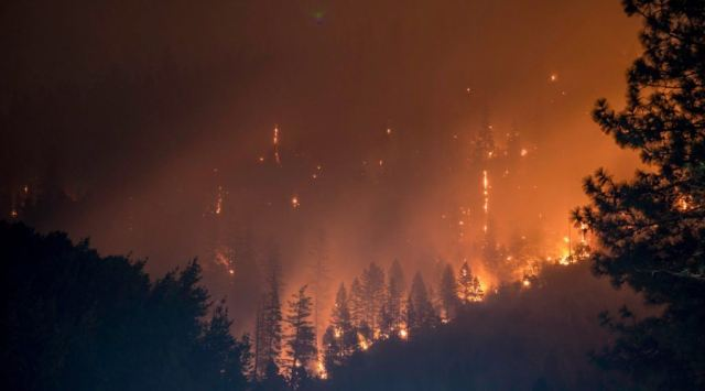 picture of boreal forest fire