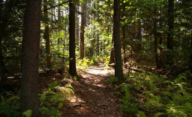 Healthy forests mean healthy people