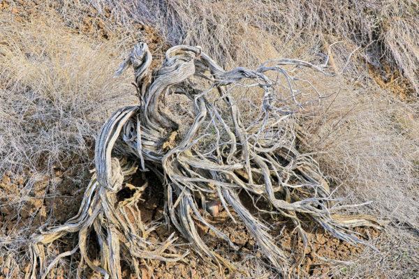 Mara SE Hill – Kamloops Trails