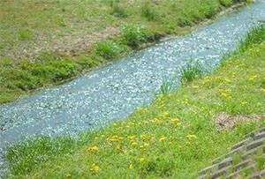 さらさら流れる小川