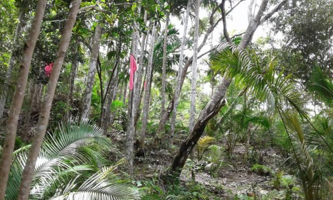 hammock site kamp aninipot