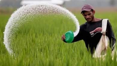 Photo of زراعة كربلاء تخصيص اسمدة داب ويوريا لمزارعي الذرة الصفراء