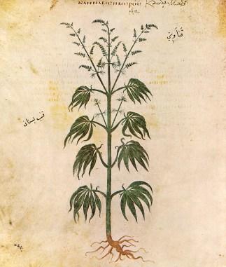Obrázek konopí z rukopisu Vienna Dioscurides pocházejícíz 6. století