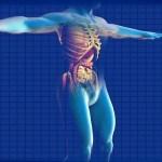 Odborná studie: Konopí a zánětlivá onemocnění střev