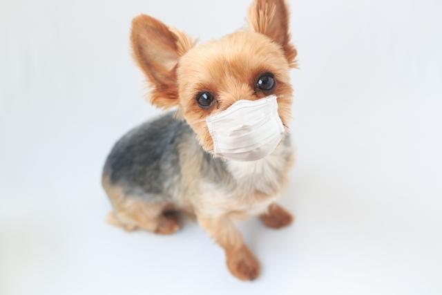 【知ってますか?】新型コロナウィルスの疑いで自宅待機しても傷病手当金がもらえます。