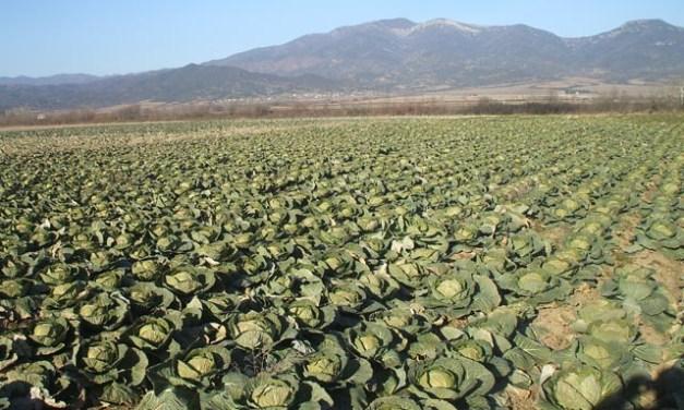 Климатските услови можат да доведат до рана берба на некои земјоделски култури, велат земјоделците