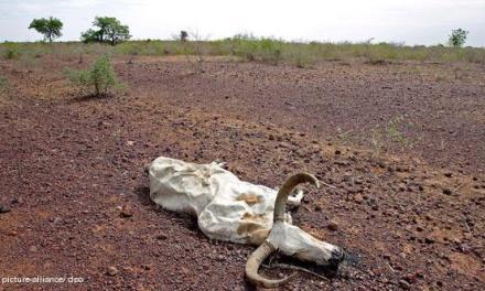 Суша ја уништува пченицата, 34 земји гладуваат