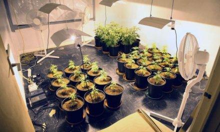 Канада-  Кој има  потреба од  марихуаната може сам да ја одгледува