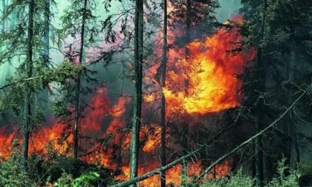 Најголемиот ризик за појава на пожари останува човечкиот фактор.
