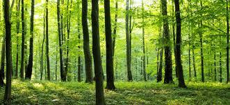 Од денеска ограничување за движење низ шумите