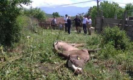 Струмичките сточари си ги бараат парите од обесштетувањето за болните говеда