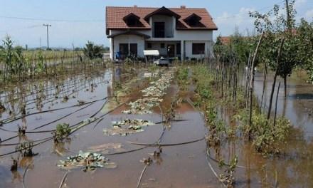Видео – Дождот ќе донесе болести кај градинарството, земјоделците стравуваат,