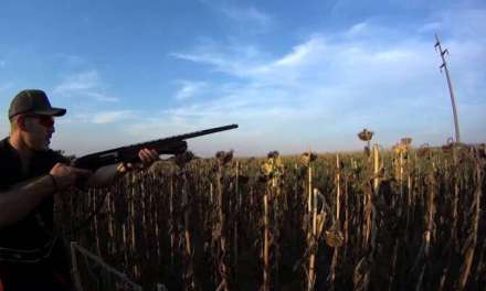 Ловот на прелетен дивеч во Василево стартува на Илинден со дневни дозволи од 200 денари до 50 евра