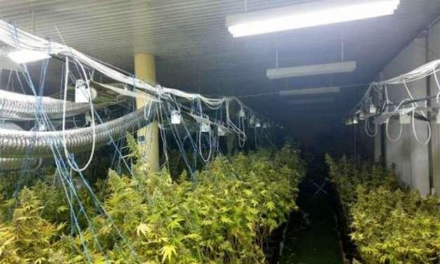 Еден тон дрогa пронајдена во лабораторија за производство на марихуана во Република Српска