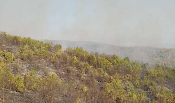 Пожар на планината Готен