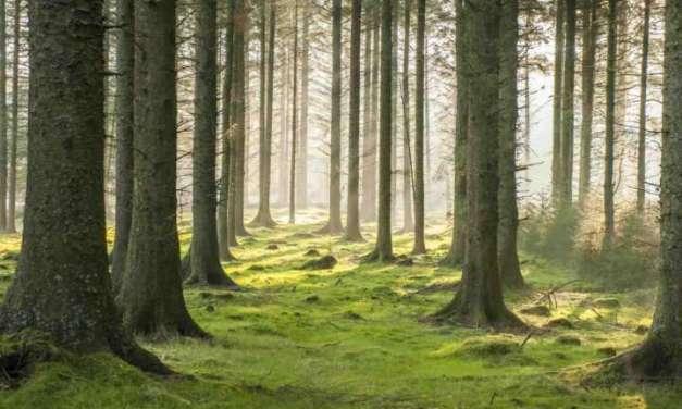 Се укинува забраната за движење низ шумите