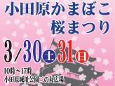 「第17回小田原かまぼこ桜まつり」のチラシ(小田原市 ホームページより)