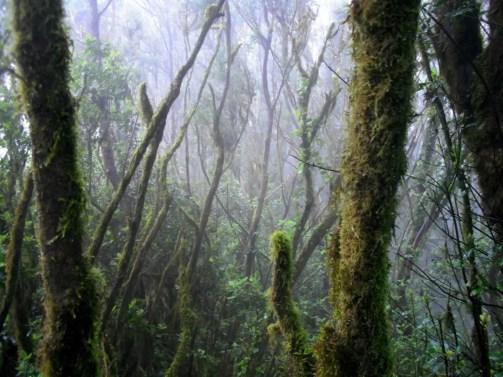 La Gomera - Bosque del Cedro 1