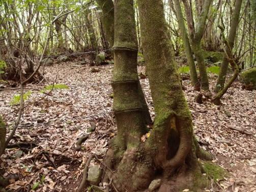 Draht um Baum