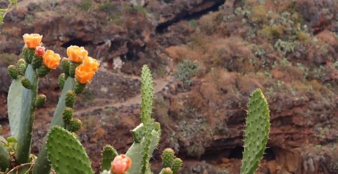 stacheliger Kaktus