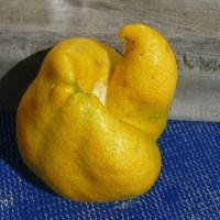 Unförmige Zitrone