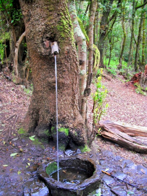 Baum - Wasserspender