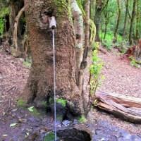 Botanischer Wasserspender