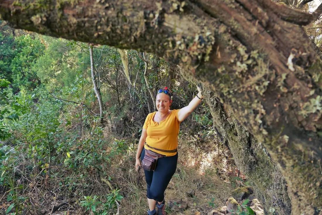 Baumheide - Brezo de árbol