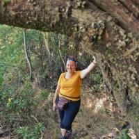 Brezo de árbol