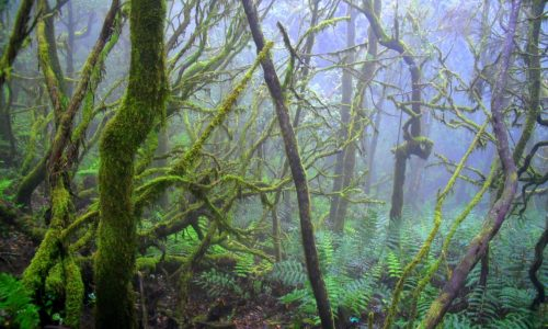 La Gomera — Bosque delCedro