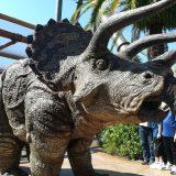 トリケラトプスのママ