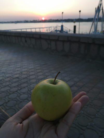 ミクロバスでもらったりんご