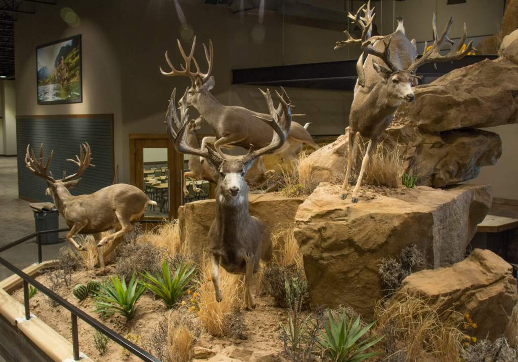 Side view of mule deer and mountain lion scene