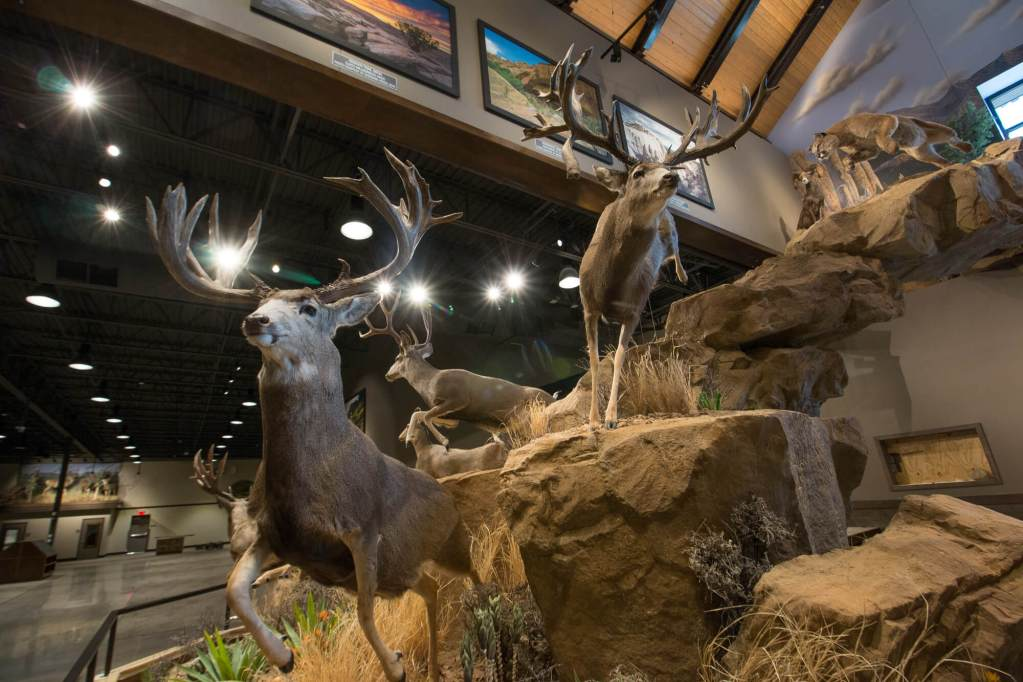 Taxidermy scene of mule deer escaping a mountain lion