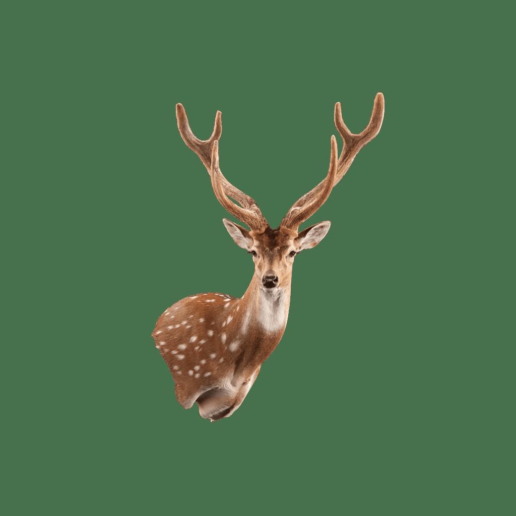 axis deer wall mount