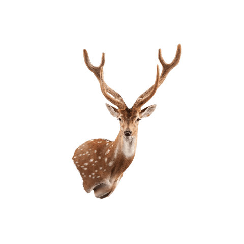 axis deer wall mount