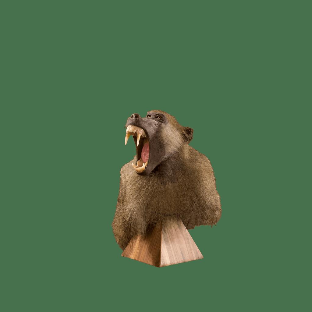 baboon pedestal