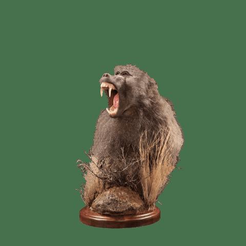 baboon pedestal pose