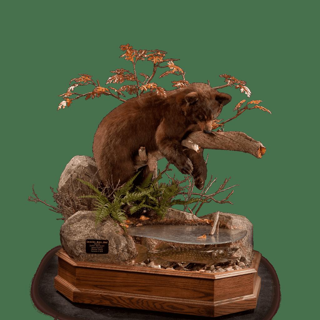black bear on a branch hunting fish